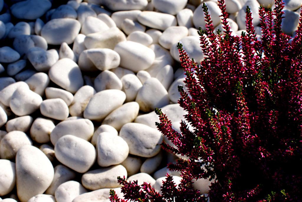 Kamień ogrodowy - Otoczaki białe